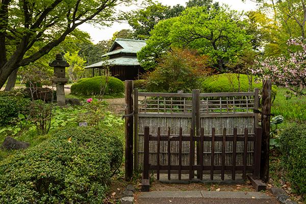 Tokyo Imperial Garden