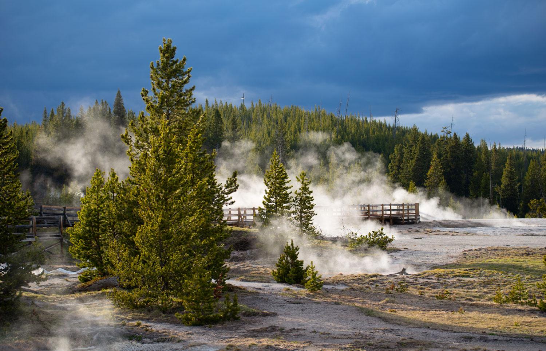 Yellowstone Roars Back To Life